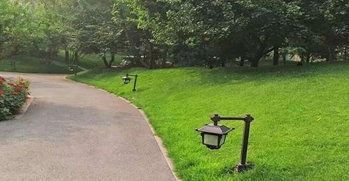 欒城草坪基地